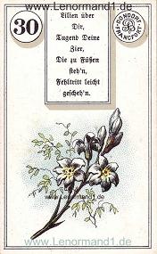 Lilie, antikes Dondorf Lenormand mit Versen