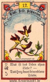 Vögel, Gustav Kühn Lenormand