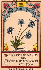 Lilie, Gustav Kühn Lenormand