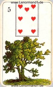 Baum, antikes Stralsunder Lenormand