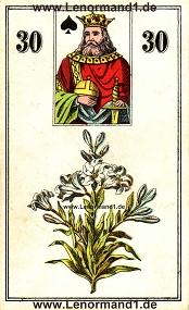 Lilie, antikes Wüst Lenormand